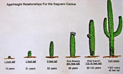 Cactus Up The Ass